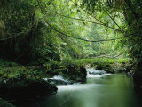 A Woodland Stream Winding Through a Burmese Jungle Lámina fotográfica por Winter, Steve