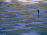 Woman Skating on the Ice at Mcphee Reservoir Photographic Print by Kate Thompson