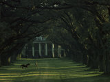A Man Leads His Horse at Oak Alley, an Antebellum Sugar Plantation Photographic Print by James L. Stanfield
