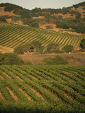 Sonoma County Vineyards, California Photographic Print by Michael S. Lewis