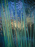 Grass Stems Set against the Rippled Surface of a Pond Photographic Print by Jason Edwards