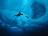 Diver Tethered against Currents Inspects Multi-Year Ice Floe Photographic Print by Paul Nicklen