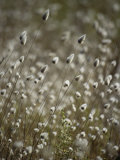 A Close View of Coastal Grass Seedlings Photographic Print by Jason Edwards