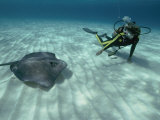 A Diver Swims Close to a Southern Stingray Lámina fotográfica por Bill Curtsinger