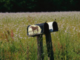 A Pair of Mailboxes Set on the Edge of a Field of Wildflowers Photographic Print by Raymond Gehman