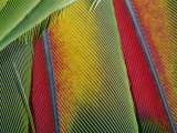 Extreme Close up of Bright Bird Feathers Photographie par George Grall