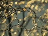 Raymond Gehman - Frozen Twigs of a Corkscrew Willow Sparkle in the Sunlight Fotografická reprodukce