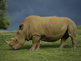 A Southern White Rhino at the San Diego Wild Animal Park Photographic Print by Michael Nichols