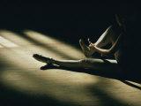 A Dance Student Adjusts a Toe Shoe 写真プリント : ロバート・マデン