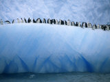 Chinstrap Penguins Lined up Along a Blue Iceberg Photographic Print by Ralph Lee Hopkins