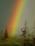 A Brilliantly Colored Rainbow Ends in a Barren Forest in the Madison River Valley Photographic Print by Norbert Rosing