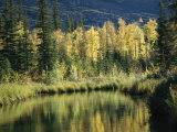 Birch and Spruce Trees are Reflected in Cli Lake Photographic Print by Raymond Gehman
