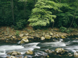 The Savage River Flows Swiftly over Rocks in a Wooded Area Photographic Print by Skip Brown