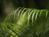 Close View of the Curling Palm Fronds Photographic Print by Anne Keiser