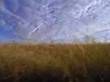 A Grassland Scene in Victoria Photographic Print by Jason Edwards