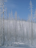 Frost Covered Burnt Trees in a Snowy Landscape Photographic Print by Tom Murphy