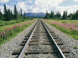 Alaska Railroad Tracks Lined on Either Side by Pink Fireweed Lámina fotográfica por Rich Reid
