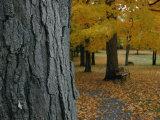 Robert Madden - Park Benches under Autumn Foliage Fotografická reprodukce