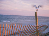 A Sea Gull Takes off from a Wooden Fence Photographic Print by Stacy Gold
