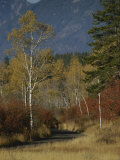 Autumn Foliage, Targhee National Forest, Palisades, Idaho Photographic Print by Raymond Gehman