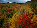 An Autumn View Photographic Print by Tim Laman