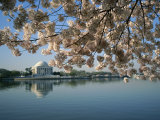 View of Cherry Blossoms and Lincoln Memorial at the Tidal Basin Fotografie-Druck von Medford Taylor