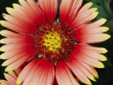 A Close View of a Cactus Flower Photographic Print by Brian Gordon Green