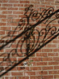 Shadow Patterns of a Lone Vine and a Wrought Iron Fence Across a Wall Photographic Print by Stephen St. John