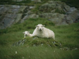 A Ewe and Her Lamb Resting on a Small Mound Photographic Print by Joel Sartore
