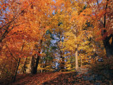 A Deciduous Forest Shows off its Fall Colors Photographic Print by Nick Caloyianis