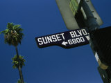 Looking up at Sunset Boulevard Sign with Palm Tree in Background Photographic Print by Todd Gipstein