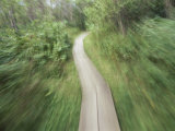 A Bike Path in the Apostle Islands Photographic Print by Raymond Gehman