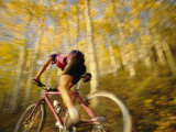 A Mountain Biker in Autumn Photographic Print by Dugald Bremner