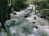 Water Cascading Down a Forest Creek Photographic Print by Marc Moritsch