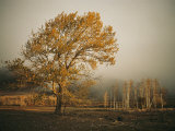 Golden Sunlit Tree in the Mist Photographic Print by Sisse Brimberg