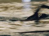 A Swimmer Does the Crawl Lámina fotográfica por Bremner, Dugald