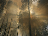 Sunlit Smoke Whispers the Firefighters Secret- Life Can Be Beautiful Even When the World Burns Down Photographie par Mark Thiessen