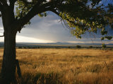 A Tree Frames a Golden Grassland and Rolling Hills under a Stormy Sky Photographic Print by Raul Touzon