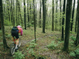 A Bicyclist Rides Through the Woods Photographic Print by Skip Brown