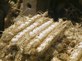 Eggs Packed in Straw for Travel and Inspection Photographic Print by Maynard Owen Williams
