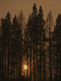 The Sun Sets Behind a Smoke-Choked Wood of Lodgepole Pines Photographic Print by Raymond Gehman