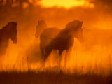 A Group of Zebras Stand in a Dust Cloud Colored Gold by the Low Sunlight Photographic Print by Beverly Joubert
