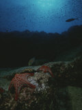 Underwater Scene of Starfish on Rock Photographic Print by Raul Touzon