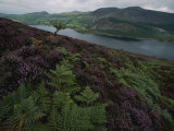 Lake District View from a Hillside Blanketed in Heather Photographic Print by Annie Griffiths Belt