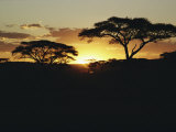 Silhouetted Acacia Trees at Sunset Photographic Print by Kenneth Love