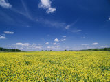 Flowering Field on the Eastern Shore of Maryland Photographic Print by Scott Sroka