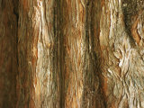 Tree Bark Photographic Print by Al Petteway