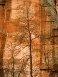 Solitary Tree in Front of Red Rock Canyon Walls at Oak Creek Canyon Photographic Print by Charles Kogod