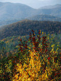 Autumn Colored Cherry Tree with View of Blue Ridge Mountains Photographic Print by Raymond Gehman