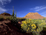 Desert Landscape with Rock Formations and Wildflowers Photographie par Raul Touzon